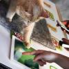 iPad для кошки